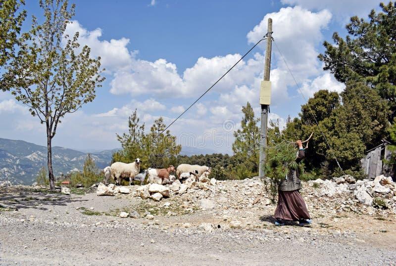 Um fim acima de uma senhora idosa e de seus carneiros fotografia de stock royalty free