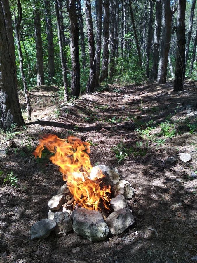 Um fogo na floresta fotografia de stock
