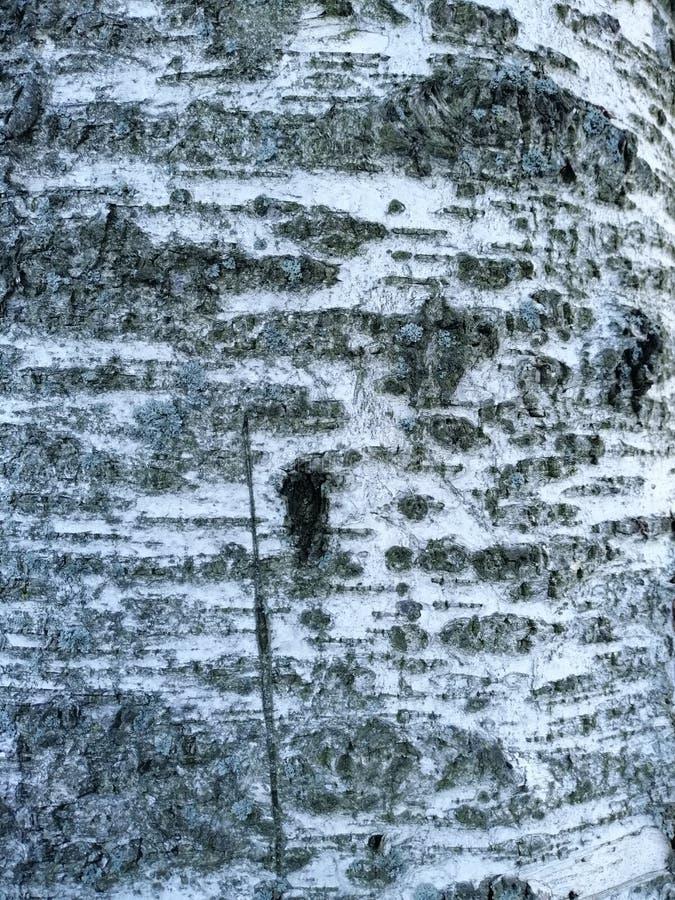 Um fragmento da casca de árvore imagem de stock