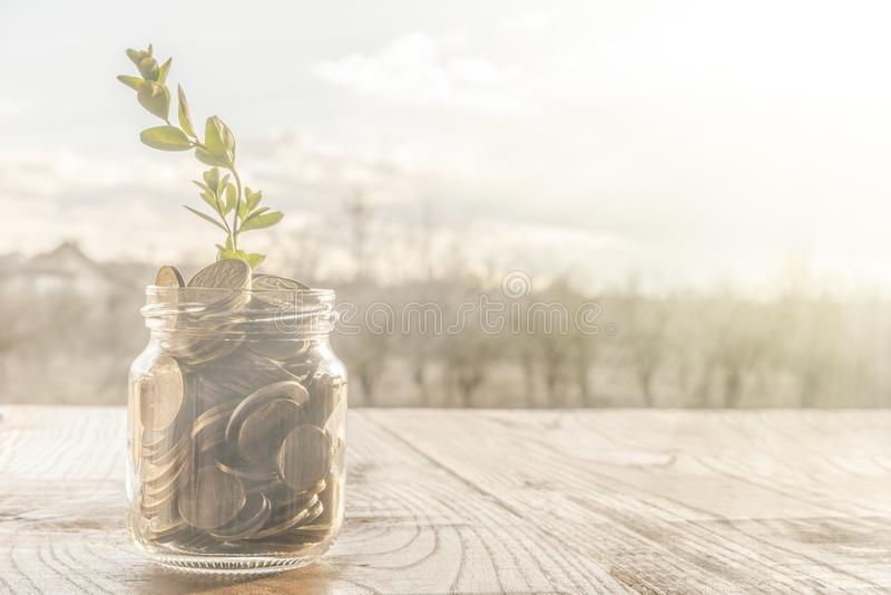 Um frasco de vidro completamente de moedas douradas e de uma planta crescente foto de stock