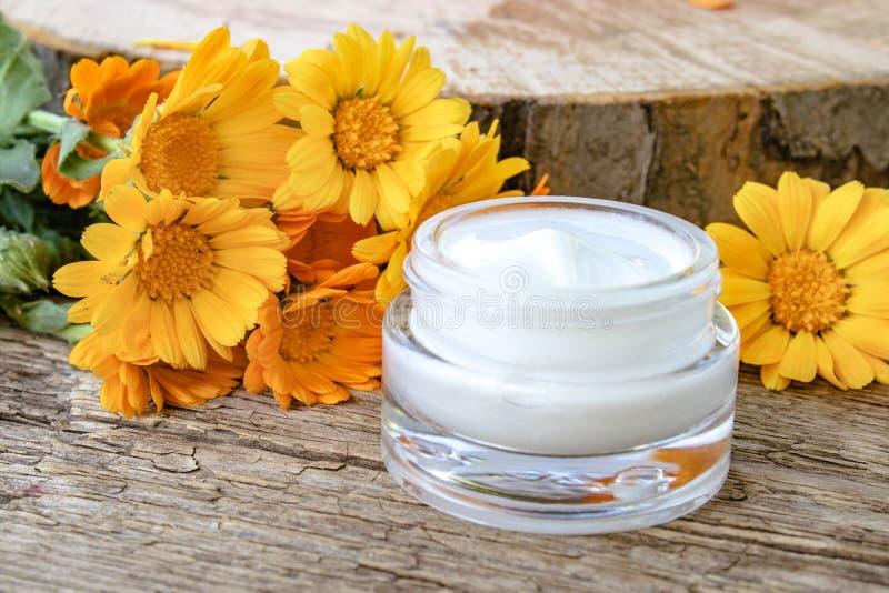 Um frasco do creme cosmético branco para o cuidado do corpo Flores alaranjadas frescas do calendula no fundo de madeira fotos de stock royalty free