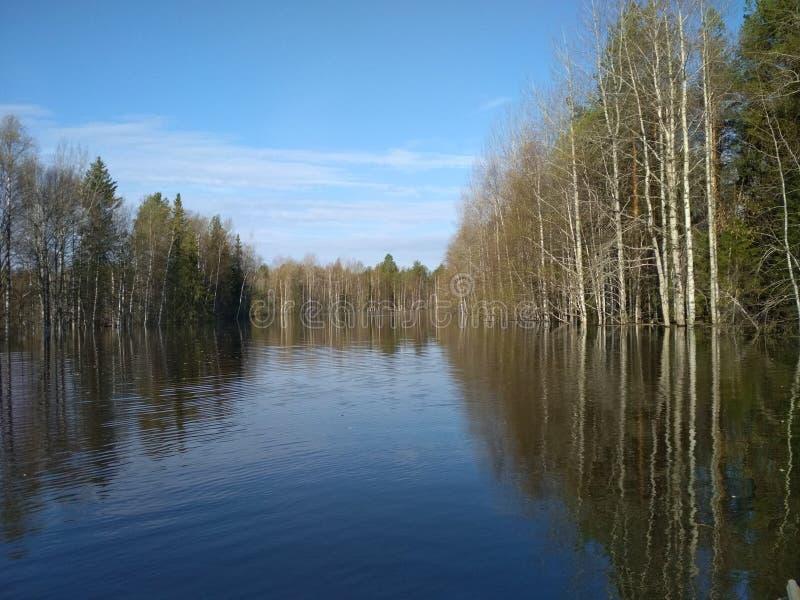Um freshet da mola em um rio pequeno da floresta Lugar: República Rússia de Comi imagem de stock