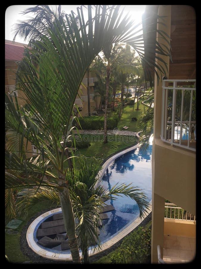 Um fulgor da manhã brilha através das folhas da palmeira foto de stock