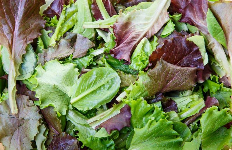 Verdes misturados e alface fotografia de stock