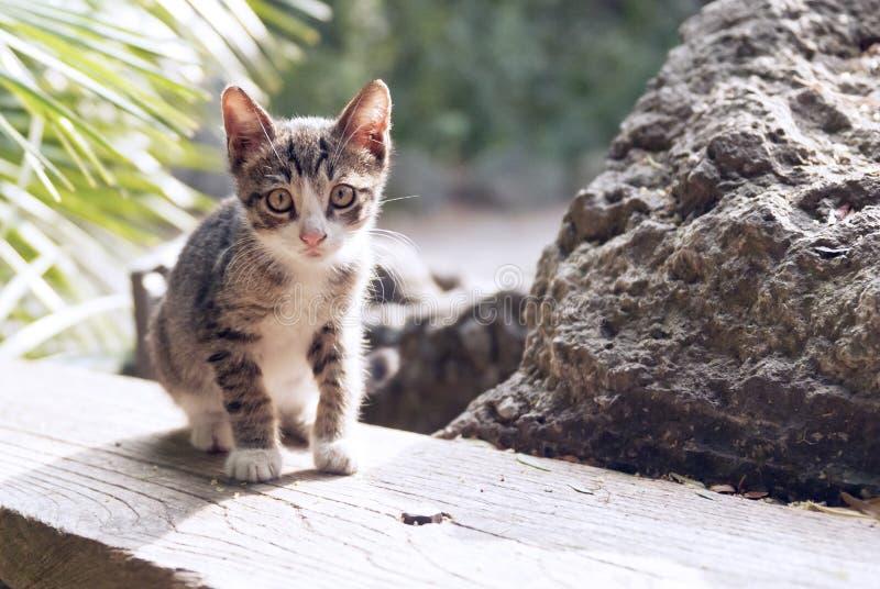 Um gatinho fotos de stock royalty free