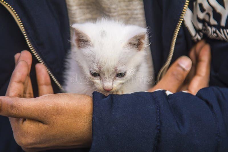 Um gatinho branco bonito está jogando com um menino fotografia de stock