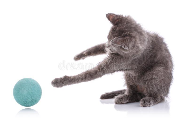 Um gatinho cinzento estica com as duas patas à bola Isolado em um fundo branco fotografia de stock royalty free
