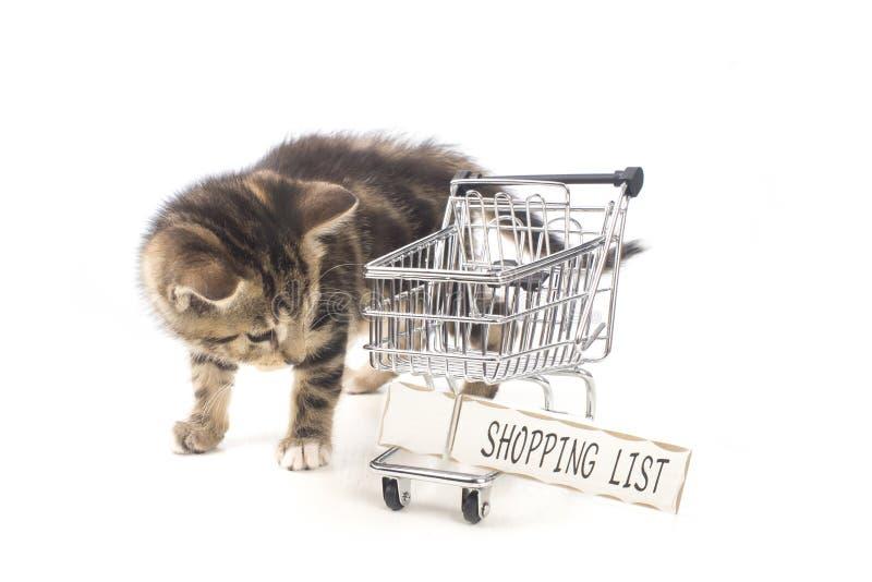 Um gatinho da compra fotos de stock