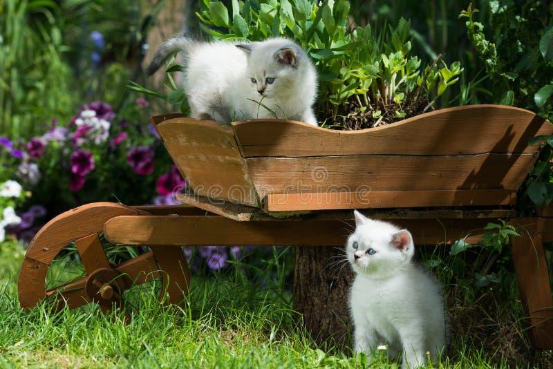 Um gatinho de café da manhã em um jardim fotografia de stock royalty free