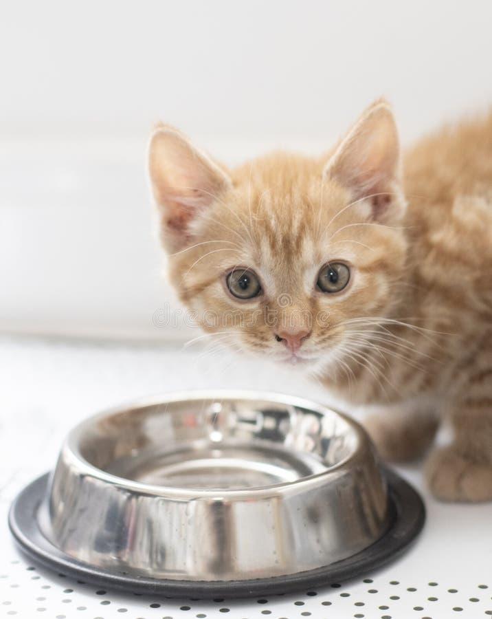 Um gatinho gengibre bonito na tigela de água imagens de stock