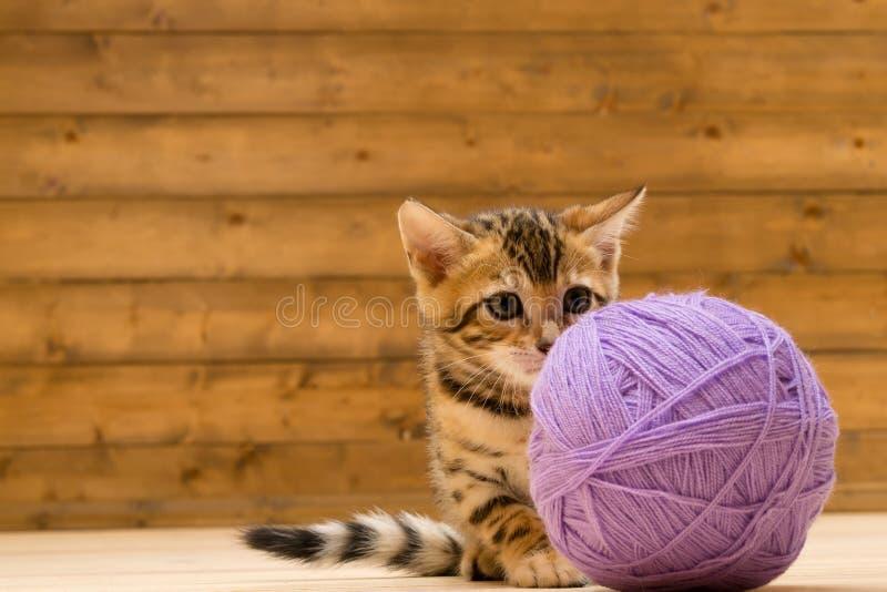 Um gatinho joga com um grande emaranhado das linhas, em um assoalho de madeira fotografia de stock