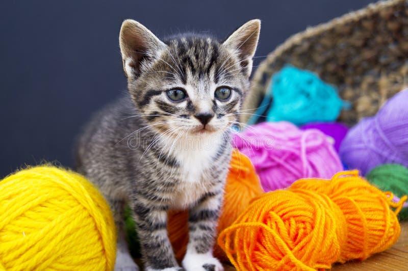 Um gatinho listrado joga com as bolas das lãs Cesta de vime, assoalho de madeira e fundo preto fotos de stock royalty free