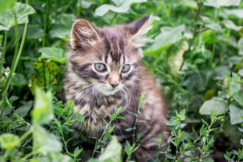Um gatinho listrado pequeno senta-se em um grass_ verde alto imagem de stock
