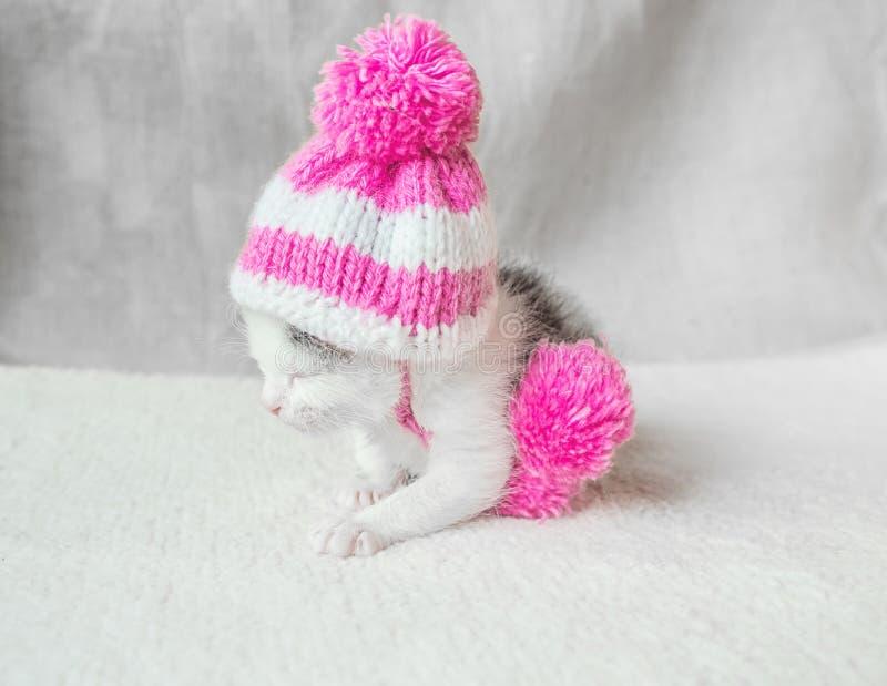 Um gatinho pequeno bonito em um rosa fez malha o chapéu com sonos dos pompoms em um tapete branco Vaquinha bonito do sono no chap imagem de stock royalty free