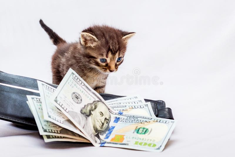 Um gatinho pequeno perto de uma bolsa com dólares Primeiro salário Ele ` s foto de stock