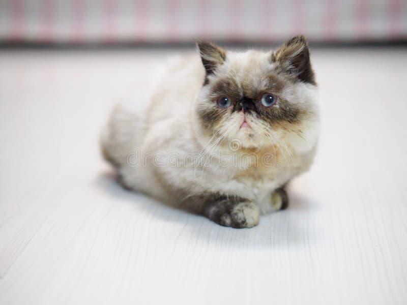 Um gatinho pequeno que senta-se no assoalho fotos de stock