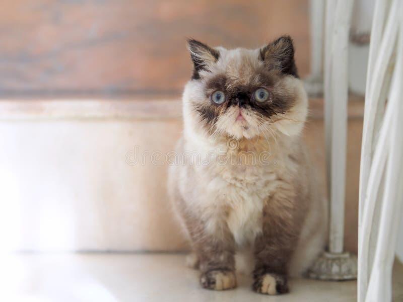 Um gatinho pequeno que senta-se no assoalho imagens de stock