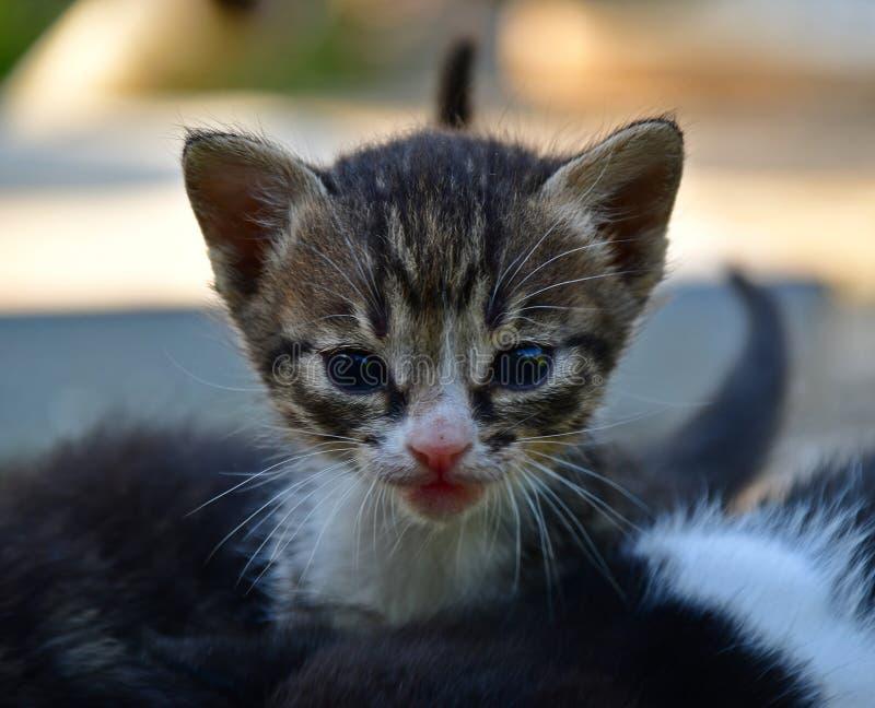 Um gatinho triste e curioso fotos de stock