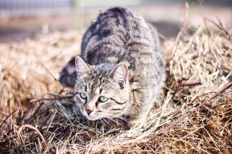 Um gato é um animal de animal de estimação pequeno imagem de stock royalty free