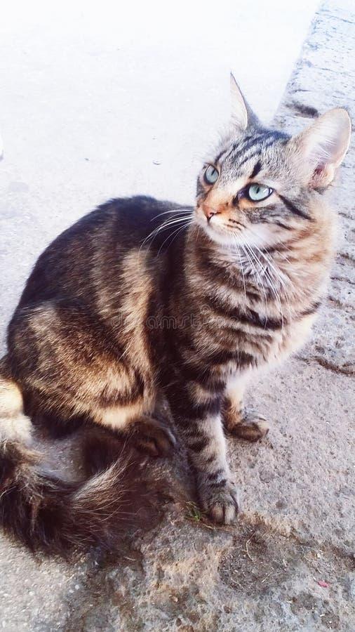 Um gato fotografia de stock royalty free