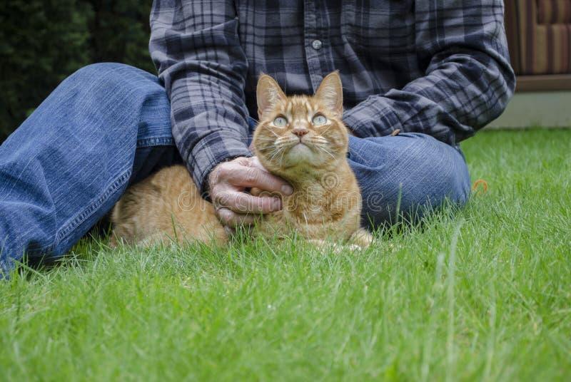 Um gato alaranjado liga-se com seu proprietário na grama foto de stock