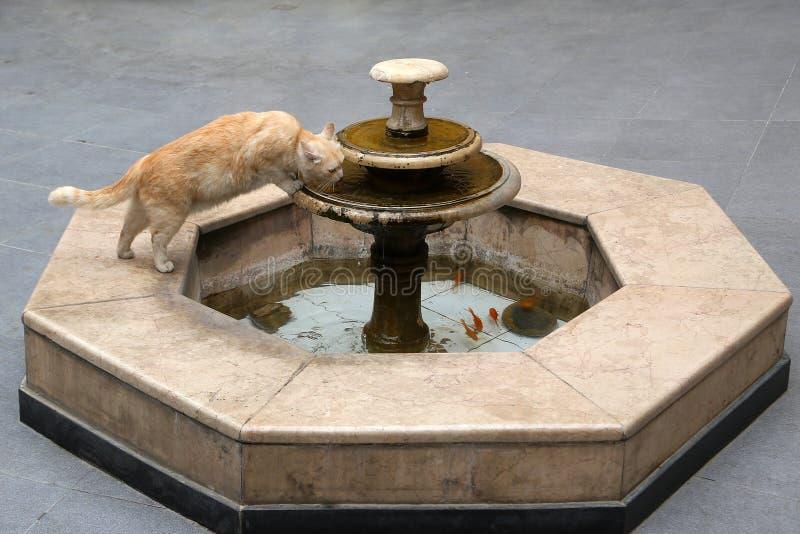Um gato bebe a ?gua de uma fonte imagens de stock