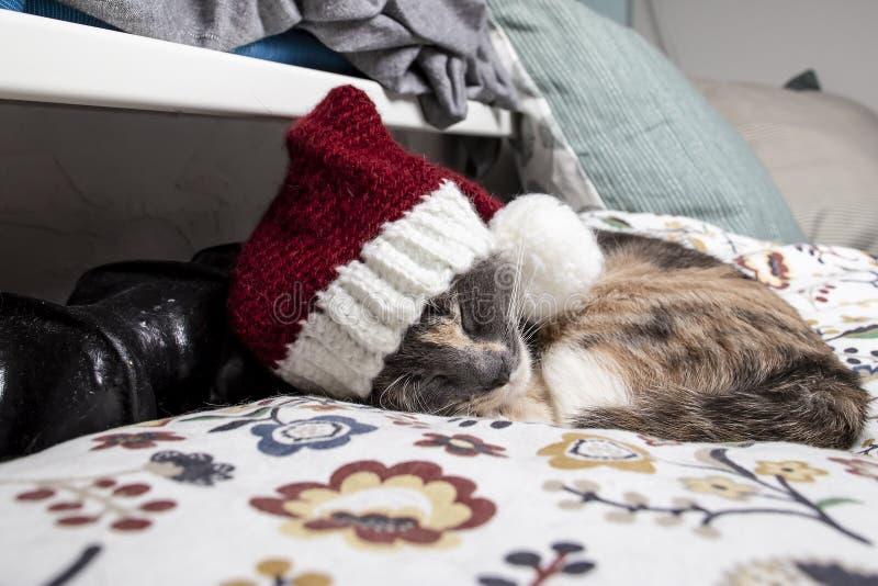 Um gato bonito em um tampão de ano novo dorme perto de um radiador morno em uma noite do inverno fotografia de stock royalty free