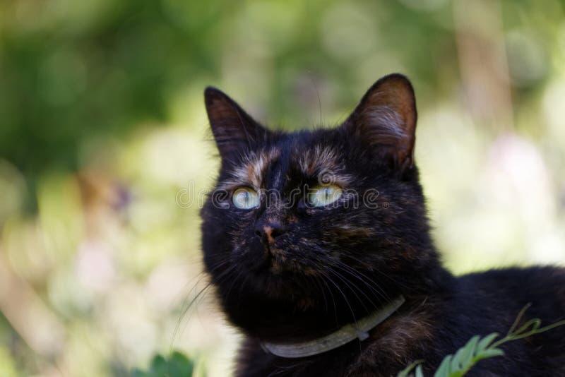 Um gato bonito que olha um pássaro foto de stock