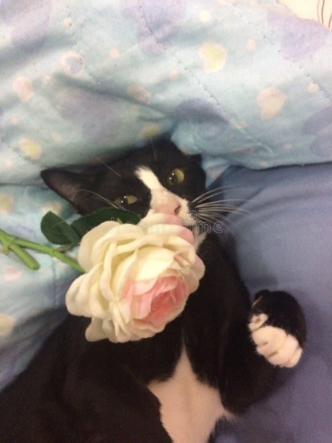 Um gato brincalhão fotos de stock