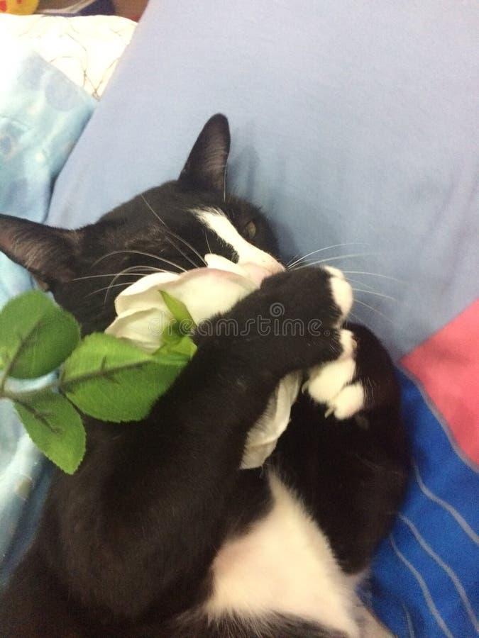 Um gato brincalhão imagens de stock