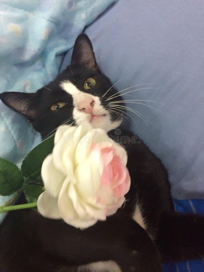 Um gato brincalhão imagem de stock