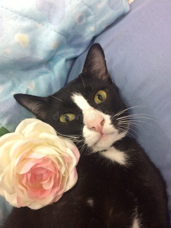 Um gato brincalhão imagens de stock royalty free
