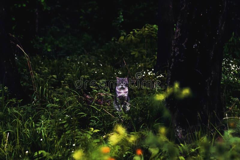 Um gato cinzento bonito que senta-se na grama verde na floresta foto de stock royalty free