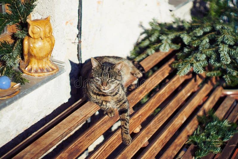Um gato cinzento senta-se em um banco de madeira perto da casa Gato cinzento bonito que senta-se em um banco de madeira fora imagens de stock royalty free