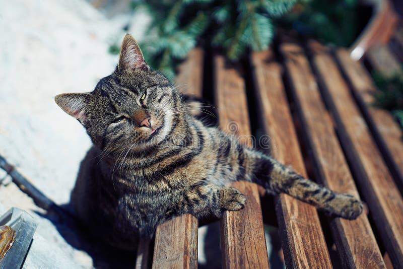Um gato cinzento senta-se em um banco de madeira perto da casa Gato cinzento bonito que senta-se em um banco de madeira fora fotografia de stock