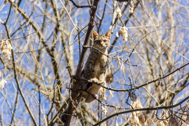 Um gato colado acima em uma árvore fotos de stock