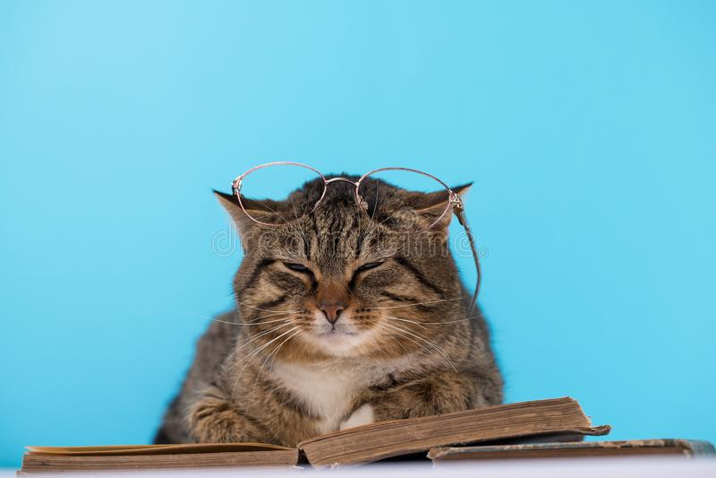Um gato com vidros senta-se perto de um livro aberto foto de stock royalty free
