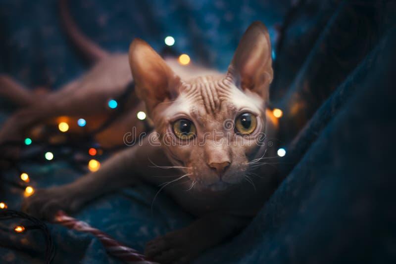 Um gato dá boas-vindas ao ano novo imagens de stock