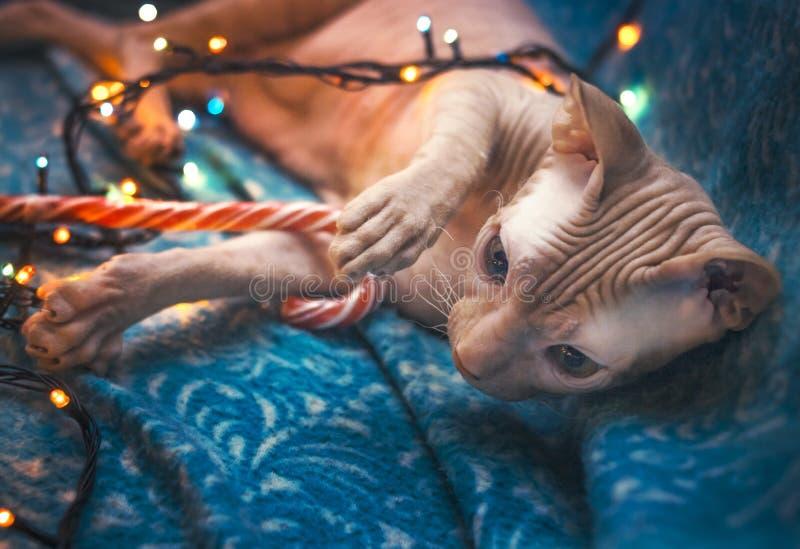 Um gato dá boas-vindas ao ano novo foto de stock royalty free