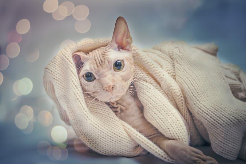 Um gato dá boas-vindas ao ano novo imagens de stock royalty free