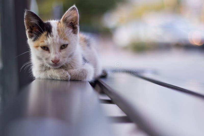 Um gato da rua só que encontra-se em um banco da parada do ônibus fotografia de stock royalty free