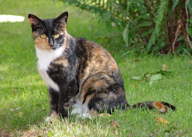 Um gato de chita senta-se na grama em um dia de verões quente imagens de stock