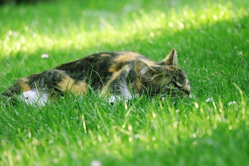Um gato desapontado que ninguém não jogue com ela fotografia de stock