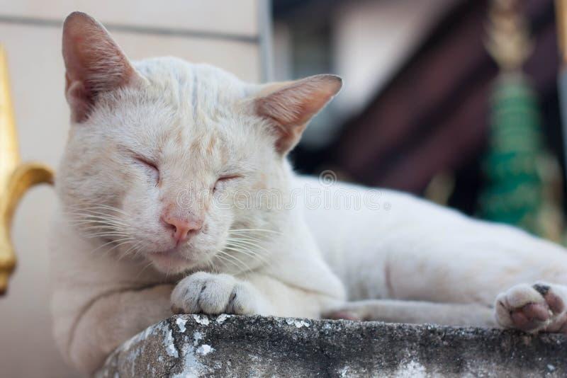 Um gato disperso fora, dormindo na coluna fotos de stock