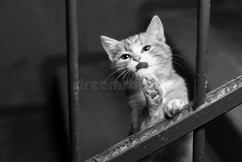 Um gato disperso no vão das escadas fotografia de stock