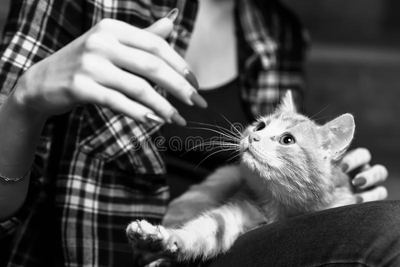 Um gato disperso no vão das escadas fotos de stock royalty free