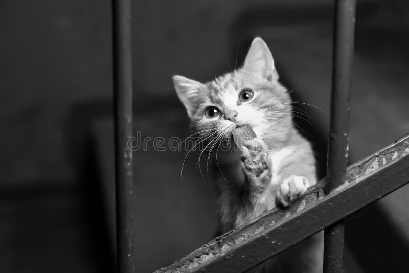 Um gato disperso no vão das escadas imagens de stock royalty free
