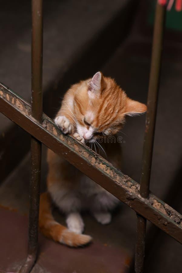 Um gato disperso no vão das escadas imagens de stock