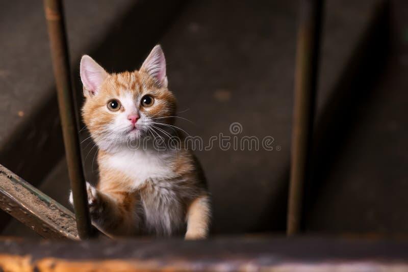 Um gato disperso no vão das escadas fotografia de stock royalty free