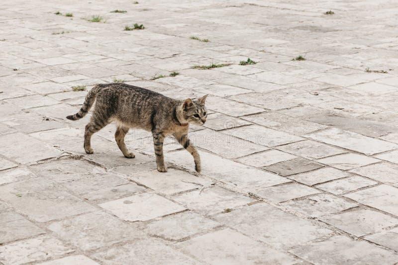 Um gato disperso imagens de stock
